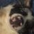 Foto del profilo di Loki